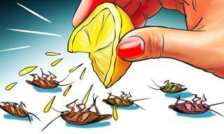 12 Formas Naturales De Deshacerse De Las Cucarachas