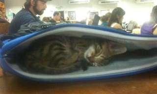 ¡Por Fin, Un Nuevo Día De Gatos!