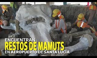 Increíble Descubrimiento De 60 Fósiles De Mamuts En México