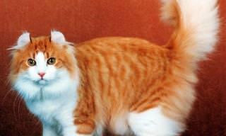 19 Gatos Que Cuestan Una Fortuna