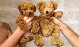 Estos 23 Perritos Son Tan Adorables Que Parecen Peluches