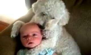 El Amor Entre Perros y Bebés