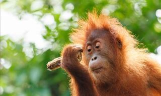 10 De Los Animales Más Inteligentes Del Mundo