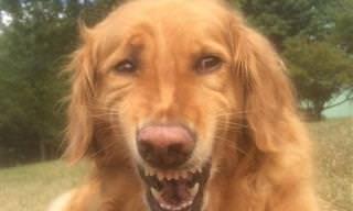 16 Perros Con Las Expresiones Más Divertidas