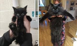 12 Tiernas Imágenes De Gatitos Antes y Después De Ser Adoptados