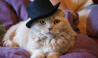 Los Más Bellos Gatos Con Sombreros
