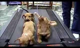 ¡Los Más Locos y Divertidos Videos De Perros!