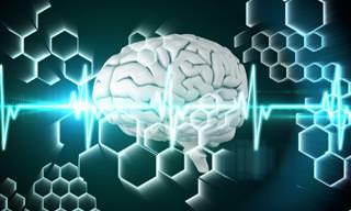 Medicina: Las Neuronas Siguen Creciendo, Incluso En Ancianos