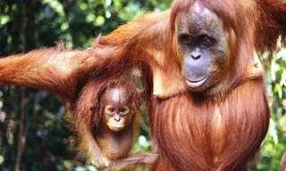 Los 23 Animales Más Inteligentes Del Mundo