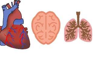 6 Órganos Que Podemos Sanar Nosotros Mismos