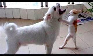Te Retamos a No Reírte Con Estos Animales