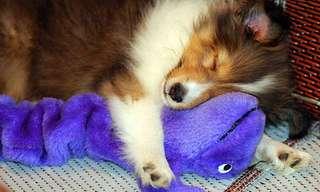 Animales Durmiendo Con Sus Peluches