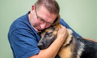 Los Beneficios Emocionales De Tener Un Perro De Compañía