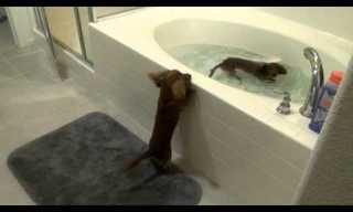 ¡Estos Perritos Aman Tomar Baños!