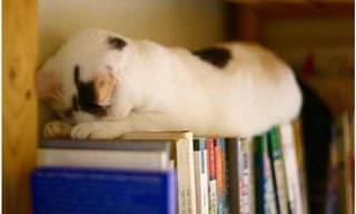 Las Posiciones Más Divertidas De Los Gatos