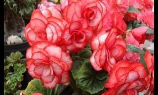 Algunas De Las Más Bellas Flores Del Mundo