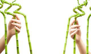 Las Enseñanzas Del Bosquecillo De Bambúes