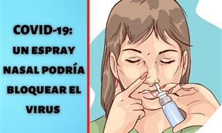 Científicos Desarrollan Un Espray Nasal Que Bloquea El Covid-19