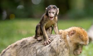 ¿Cuál Es El Primer Animal Que Ves?