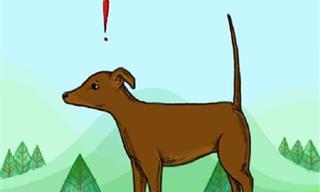 Mira La Cola De Tu Perro Para Saber De Qué Humor Está