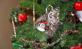 ¡Las Mascotas Están Más Traviesas En Navidad!
