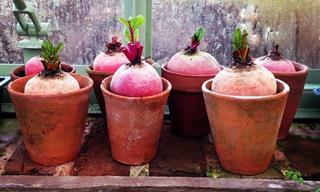 15 Vegetales Que Puedes Cultivar En Casa