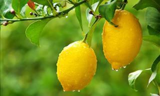 15 Beneficios Saludables Del Limón