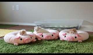 Adorables Gatitos Durmiendo Sobre Peluches