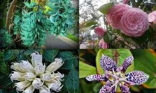 21 Deslumbrantes y Exóticas Flores