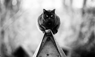 Hermosas Imágenes De Gatos Monorriel