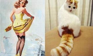 Gatitos Que Creen Que Son Modelos De Los Años 50