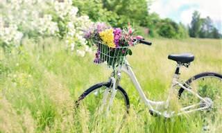 La Belleza De La Primavera. Poema Interactivo