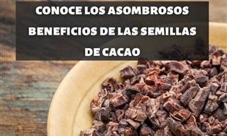 Las Semillas De Cacao Son Una Opción Saludable Para Los Amantes Del Chocolate