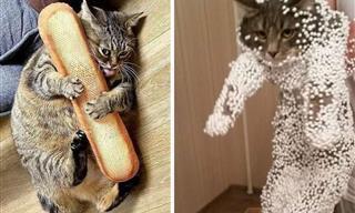 13 Gatos Captados En Momentos Bastante Inusuales