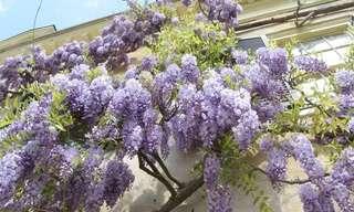 9 Plantas Invasivas Para Tener En Cuenta