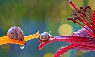 El Mundo Miniatura y Colorido De Los Caracoles