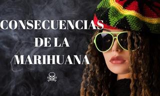 10 Efectos En Tu Organismo Por El Consumo De Marihuana