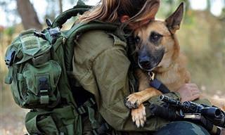 No Hay Criaturas Más Leales Que Los Perros De Servicio