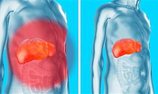Cómo Cuidar y Desintoxicar Tus Riñones, Hígado y Vejiga