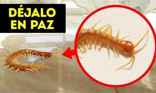 Si Ves Este Insecto En Tu Casa, ¡No Lo Aplastes!