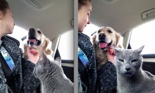 14 Graciosos y Divertidos Memes De Mascotas Que Te Harán Reír