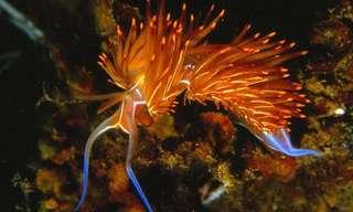 Los Vibrantes Colores Del Caracol De Mar
