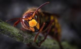 Estos 3 Insectos Podrían Salvar Tu Vida En Un Futuro