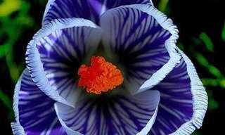 La Belleza De Estas 15 Flores Te Cautivará