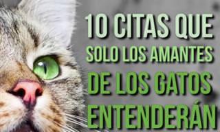 10 Hermosas Citas Que Describen La Vida Con Un Gato