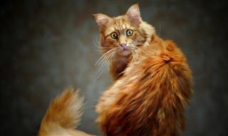 Gatos Que Persiguen Su Cola, Resultado Divertido