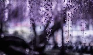 La Naturaleza Etérea De Hidenobu Suzuki