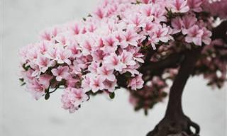 Este Fotógrafo Captura La Belleza De Los Bonsai