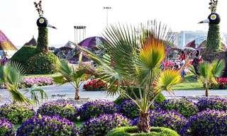 Los Jardines Coloridos y Frondosos De Dubái