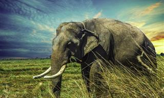 9 Animales Con Una Esperanza De Vida Impresionante